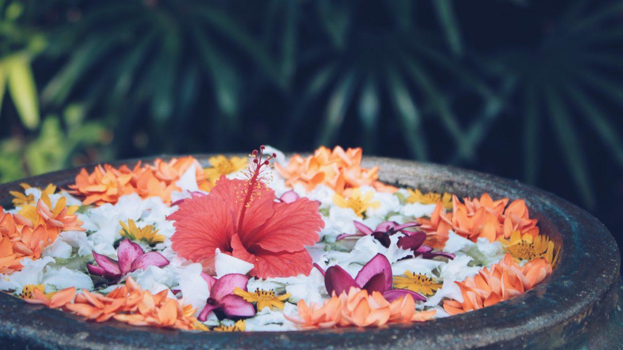 水の中にたくさんの花
